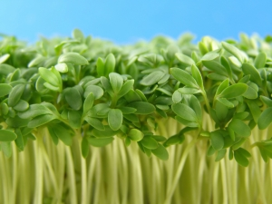 HealthyEating-Cress
